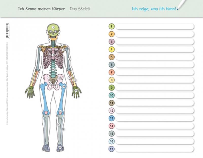 Veris Direct - Ich kenne meinen Körper - Das Skelett